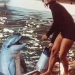 1969 flyttade tolv delfiner från Mexikanska bukten till den svenska djurparken Kolmården. Med hjälp av två seriekopplade Flygtpumpar pumpades 4,5 miljoner liter vatten 30 meter upp från närbelägna Bråviken till delfinernas bassäng. Foto Xylem - Flygt museum